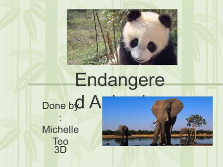 Endangere d Animals Done by : Michelle Teo 3D. Giant Panda The Giant Panda is an endangered animal, an estimated 1600 individuals in the wild. Pandas.