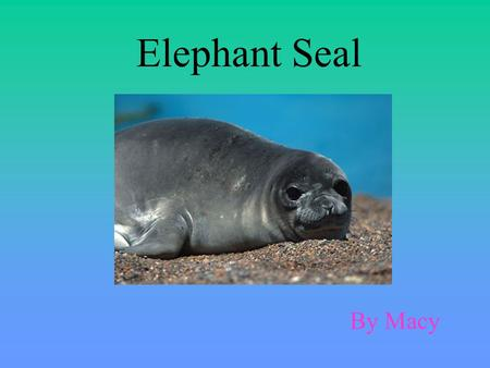 Elephant Seal By Macy. The elephant seal's biome is Antarctica which is in the Arctic Circle and near the North Pole. In Antarctica the climate is very.