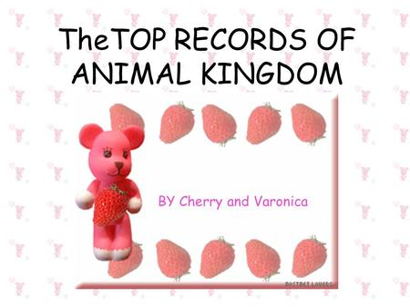 TheTOP RECORDS OF ANIMAL KINGDOM BY Cherry and Varonica.