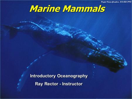 Marine Mammals Introductory Oceanography Ray Rector - Instructor.