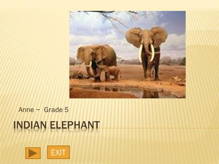Anne ~ Grade 5 EXIT.  The elephant is the largest living land animal on earth. The Indian elephant, Elephas maximus indicus, is smaller than its African.