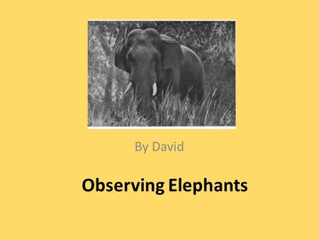 Observing Elephants By David. I am going to China to see some wild elephants in their natural habitat. I could learn about them in their natural environment.