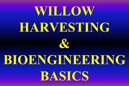 WILLOW HARVESTING & BIOENGINEERING BASICS. BIOENGINEERING: The use of living plant materials to stabilize streambanks Most bioengineering gives Mother.