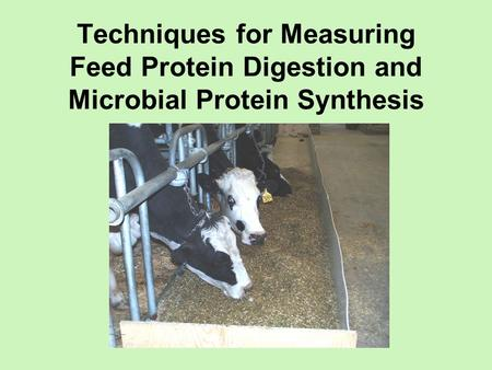 Techniques for Measuring Feed Protein Digestion and Microbial Protein Synthesis To establish the amounts and ratios of nutrients necessary for optimal.