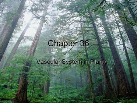 Chapter 36 Vascular System in Plants. Three ways water moves through root hairs 1)Apoplast: water moves through cell walls and never enter cells 2)Symplast:
