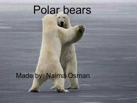Polar Bears Made by: Naima Osman Polar bears Made by: Naima Osman.