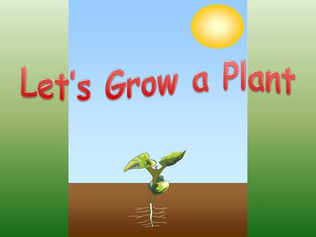 First, we start by planting a seed in the ground. A seed is dry and has a tough outer shell.