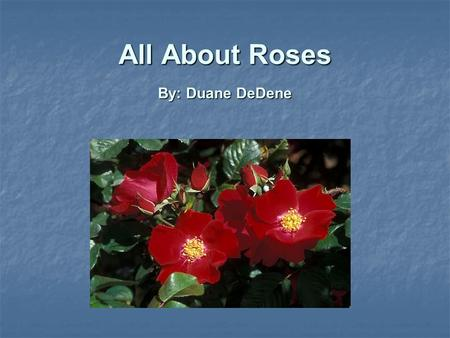 All About Roses By: Duane DeDene. Introduction Origins and Types of Rose Origins and Types of Rose What to Look For When Purchasing a Rose What to Look.