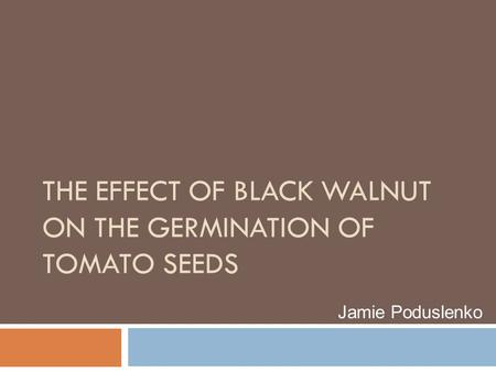 THE EFFECT OF BLACK WALNUT ON THE GERMINATION OF TOMATO SEEDS Jamie Poduslenko.