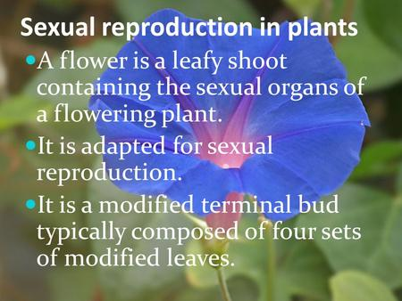 Sexual reproduction in plants