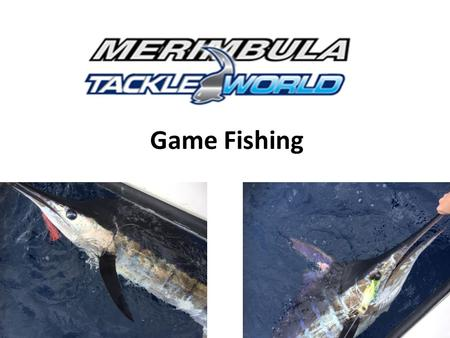 Game Fishing. Contents Marlin Yellowfin Tuna Bluefin Tuna Sharks.