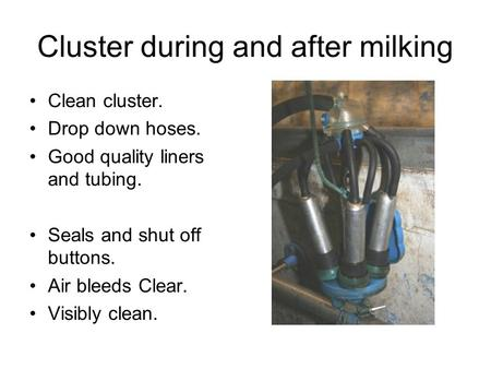 Cluster during and after milking Clean cluster. Drop down hoses. Good quality liners and tubing. Seals and shut off buttons. Air bleeds Clear. Visibly.