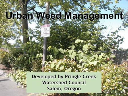 Developed by Pringle Creek Watershed Council Salem, Oregon Urban Weed Management.