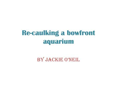 Re-caulking a bowfront aquarium By Jackie O'Neil.