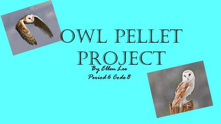 By Ellen Lee Period 6 Code 8 Owl Pellet Project Introduction.
