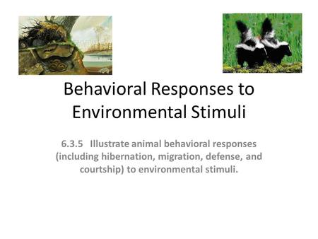 Behavioral Responses to Environmental Stimuli 6.3.5 Illustrate animal behavioral responses (including hibernation, migration, defense, and courtship) to.