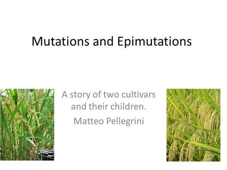 Mutations and Epimutations A story of two cultivars and their children. Matteo Pellegrini.