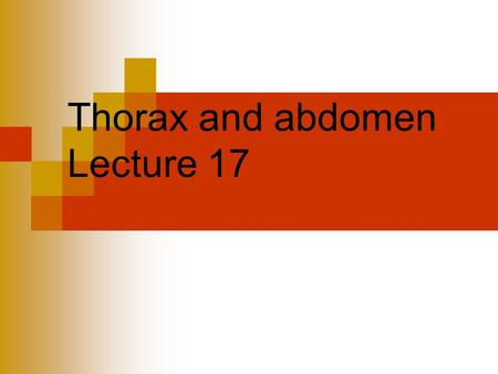 Thorax and abdomen Lecture 17