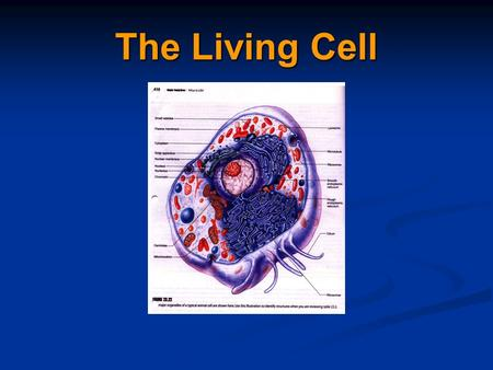 The Living Cell. Cell Theory Cells are the smallest living things Cells are the smallest living things Cells arise from previously Cells arise from previously.