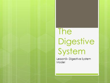 The Digestive System Lesson5– Digestive System Model.