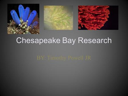 Chesapeake Bay Research BY: Timothy Powell JR. Why is it important to have a variety of living things in the Bay? It is important to have a variety of.