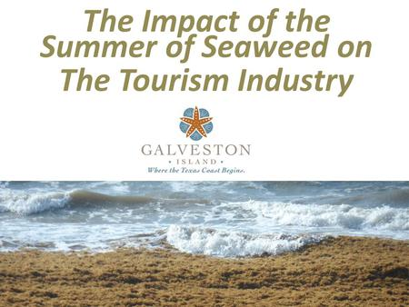 The Impact of the Summer of Seaweed on The Tourism Industry.