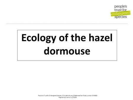 People's Trust for Endangered Species, 3 Cloisters House, 8 Battersea Park Road, London SW84BG Registered charity no 274206 Ecology of the hazel dormouse.