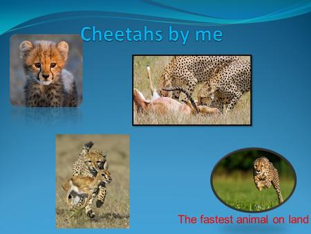The fastest animal on land. Description Size (weight) Diet Enemies sound Interesting facts.
