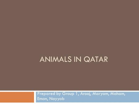 ANIMALS IN QATAR Prepared by Group 1, Arooj, Maryam, Maham, Eman, Nayyab.