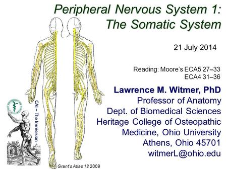 Peripheral Nervous System 1: The Somatic System 21 July 2014 Reading: Moore's ECA5 27–33 ECA4 31–36 Grant's Atlas 12 2009 Lawrence M. Witmer, PhD Professor.