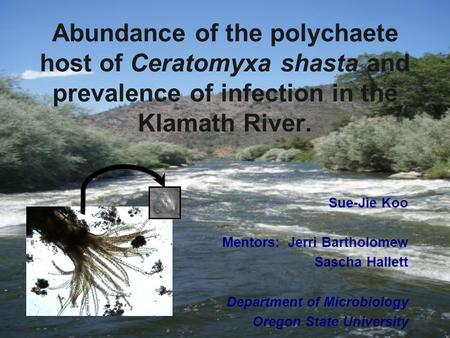 Abundance of the polychaete host of Ceratomyxa shasta and prevalence of infection in the Klamath River. Sue-Jie Koo Mentors: Jerri Bartholomew Sascha Hallett.