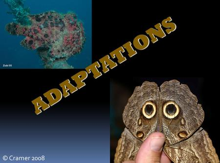 ADAPTATIONS © Cramer 2008.