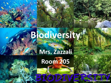 Biodiversity Mrs. Zazzali Room 205. Lesson 1- What are organisms? Class consensus-period 1 What are organisms? AliveMoves GrowsReproduces DiesHas to eat.