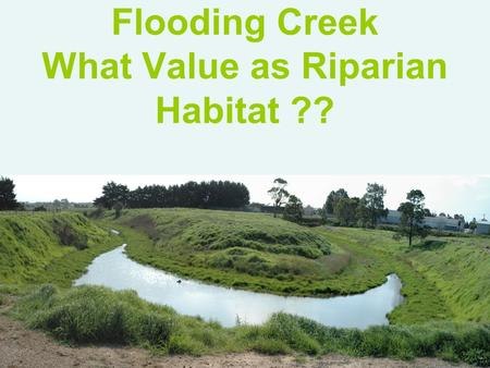 Flooding Creek What Value as Riparian Habitat ??.