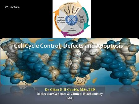 Dr Gihan E-H Gawish, MSc, PhD Molecular Genetics & Clinical Biochemistry KSU Cell Cycle Control, Defects and Apoptosis 1 st Lecture.