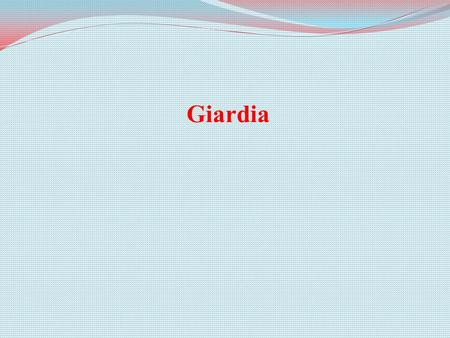 Giardia. Hazard Identification What is Giardia? single-celled flagellate protozoan order Diplomonadida Giardia is a single-celled flagellate protozoan.