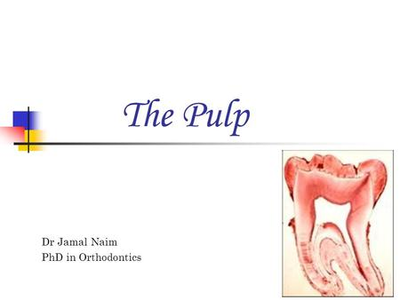 The Pulp Dr Jamal Naim PhD in Orthodontics.