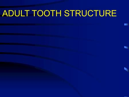 ADULT TOOTH STRUCTURE. 1.In adult humans there are 32 permanent teeth. 2.These are preceded during childhood by 20 deciduous teeth. 3.The tooth lies in.