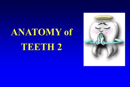 ANATOMY of TEETH 2. 1. Anatomy of a tooth. a. Anatomical crown- portion of tooth covered with enamel a. Anatomical crown- portion of tooth covered with.