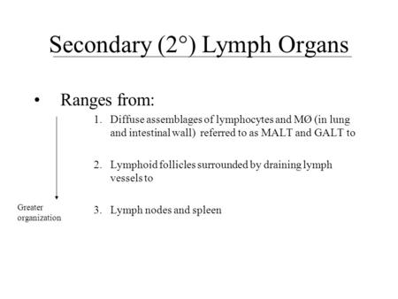 Secondary (2°) Lymph Organs Ranges from: 1.Diffuse assemblages of lymphocytes and MØ (in lung and intestinal wall) referred to as MALT and GALT to 2. Lymphoid.