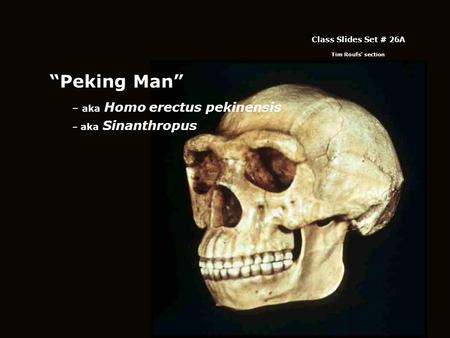 """Peking Man"" – aka Homo erectus pekinensis – aka Sinanthropus Class Slides Set # 26A Tim Roufs' section."