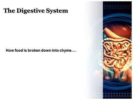 How food is broken down into chyme….