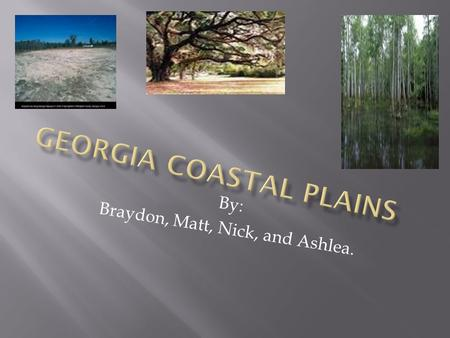 By: Braydon, Matt, Nick, and Ashlea.  Georgia Coastal Plains- Slide 1  Table of Contents- Slide 2  The Wet Lands (Okefenokee)- Slide 3  Coastal Plains.
