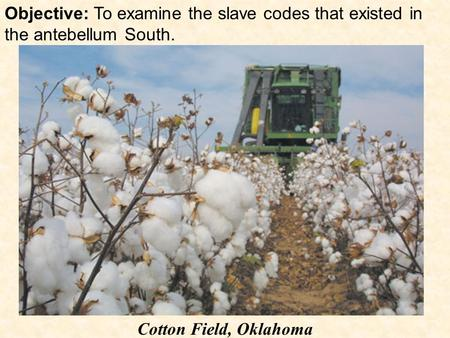 Objective: To examine the slave codes that existed in the antebellum South. Cotton Field, Oklahoma.