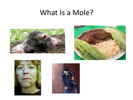 What Is a Mole?.