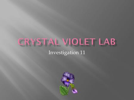 Investigation 11.  Serial dilution  CV will stain skin and clothes  NaOH is a corrosive skin irritant  Wear goggles and aprons  Clean stained glassware.