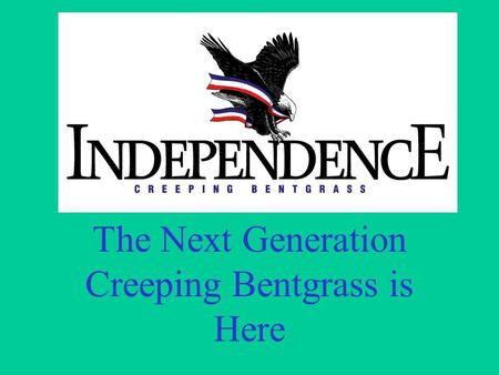 The Next Generation Creeping Bentgrass is Here. Newer bents vs. existing bents Short bentgrass development history –Varieties have different attributes.