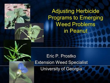 Adjusting Herbicide Programs to Emerging Weed Problems in Peanut Eric P. Prostko Extension Weed Specialist University of Georgia.