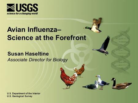 Susan Haseltine Associate Director for Biology U.S. Department of the Interior U.S. Geological Survey Avian Influenza– Science at the Forefront.