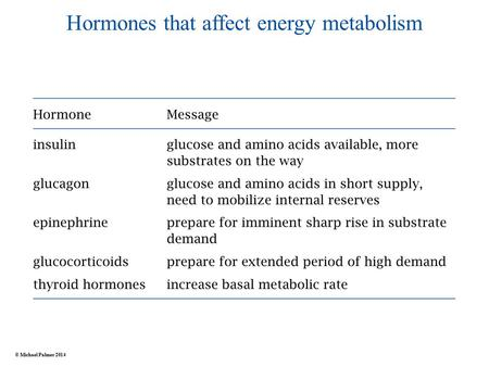 Hormones that affect energy metabolism © Michael Palmer 2014.